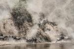 Wildebeest crossing VI